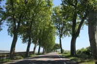 chalon_sur_saone-16