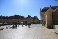 dijon-at-day-12