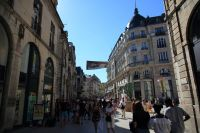 dijon-at-day-15