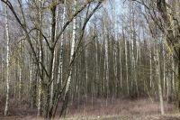 litauen-landschaft-13