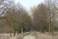 litauen-landstrasse-06