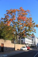 fulda-autumn-05