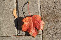 fulda-autumn-06