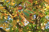 fulda-autumn-08
