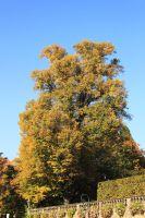 fulda-autumn-16