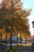 fulda-autumn-55