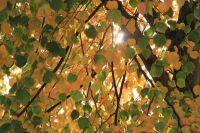 fulda-autumn-56