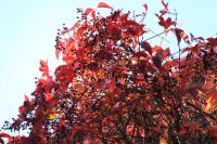 fulda-autumn-59