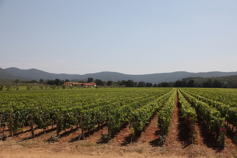 Bolgheri - Redwine - Wineyard